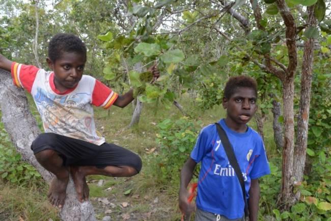 (Literasi Kelas X) Hutan, Taman Bermain Anak Indonesia di Perbatasan Papua Nugini