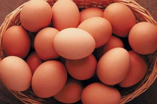 (Literasi Kelas X) Mengapa Telur Berbentuk Oval, ya? Cari Tahu Rahasianya, yuk!